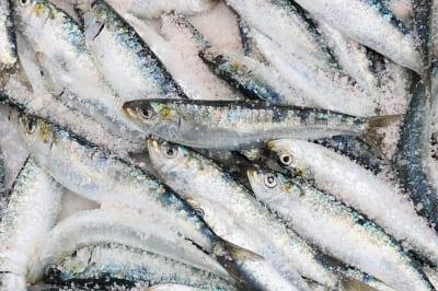 Fische - Omega 3 Fettsäuren - Gegen Bluthochdruck
